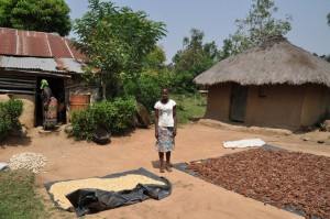 Homestead in Nyanza: drying millet